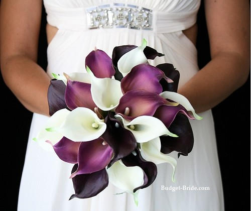 Persian Calla Package
