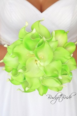 Akron Calla Lily Collection