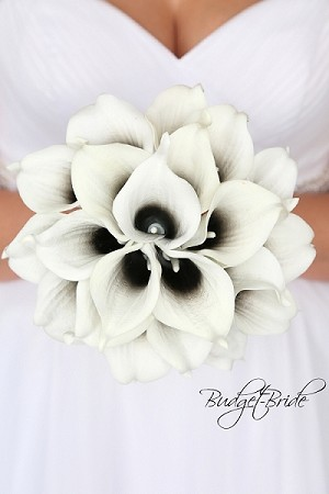 Benton Calla Lily Collection